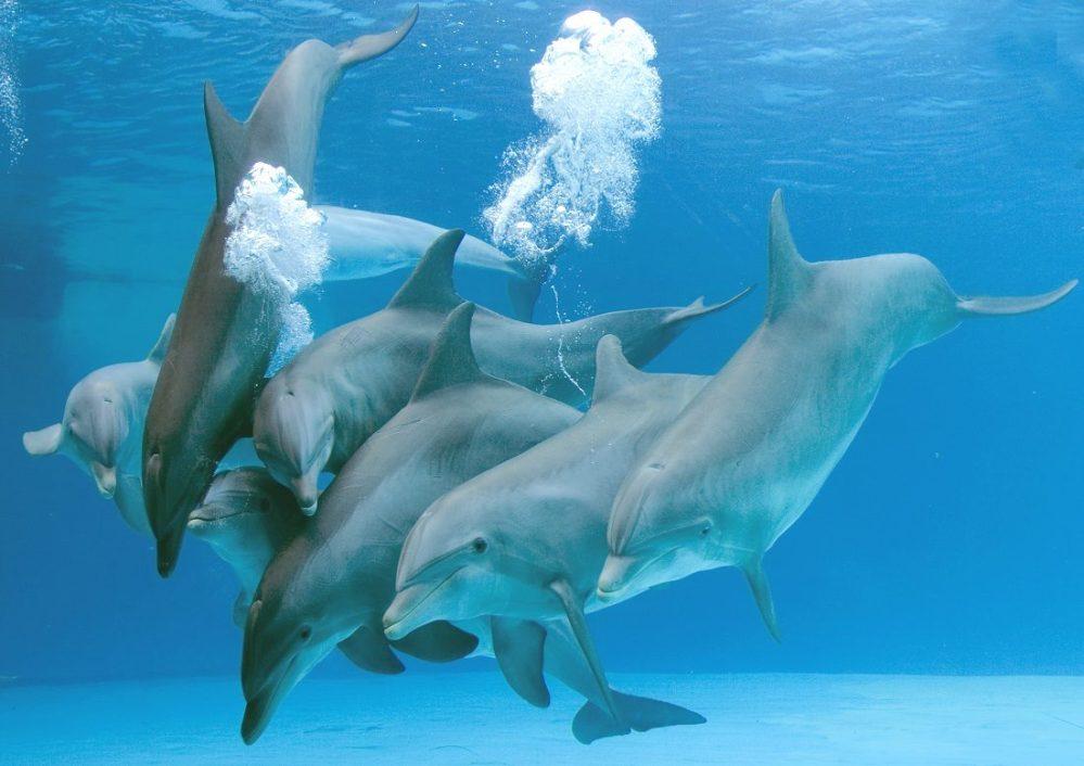 parto-de-los-delfines